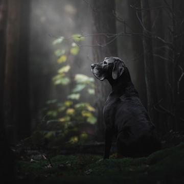Kutya az erdőben, poszter (368x254; 368x280; 254x184 cm) 13133