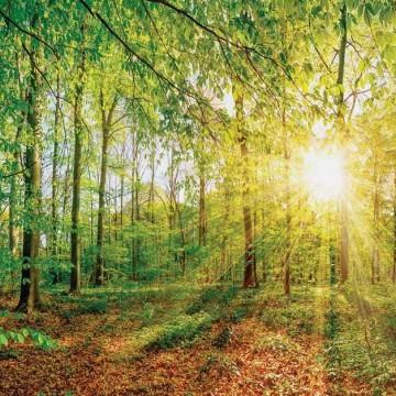 Fali poszter erdő 13462 (368x254; 368x280; 254x184)