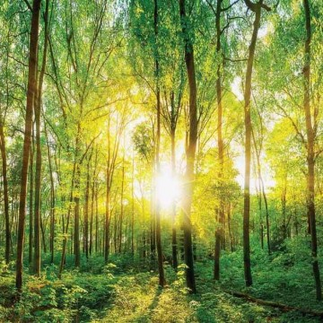 Fali poszter erdő 13461 (368x254; 368x280; 254x184)