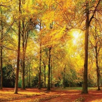 Őszi erdő poszter13460 (368x254; 368x280; 254x184)