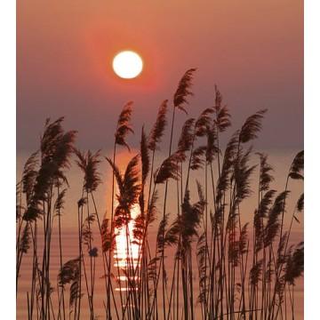 Poszter, naplemente a vízparton 375x250 / 225x250 / 150x250 / 375x150 cm (0089)