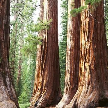 Poszter, erdő 375x250 / 225x250 cm / 150x250 cm (0102)