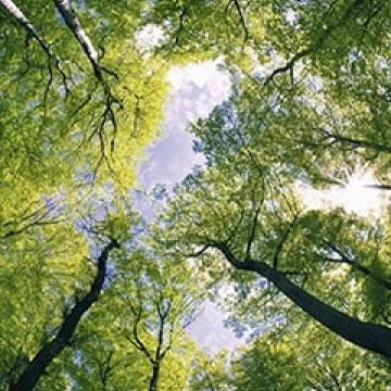 Poszter, erdő 375x250 / 225x250 cm / 150x250 cm (0104)