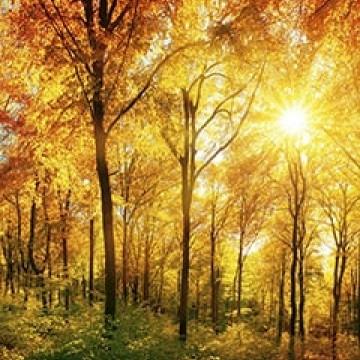 Poszter, erdő 375x250 / 225x250 cm / 150x250 / 375x150 cm (0067)