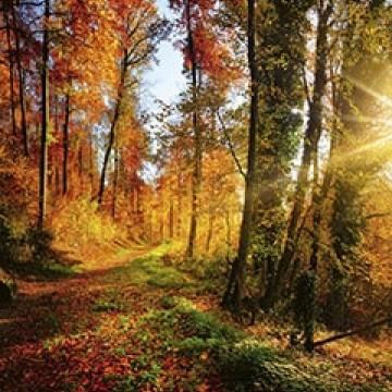 Poszter, erdő 375x250 / 225x250 cm / 150x250 cm (0065)