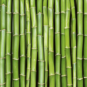 Bambusz, poszter 375x250 / 225x250 / 150x250 cm (MS0165)